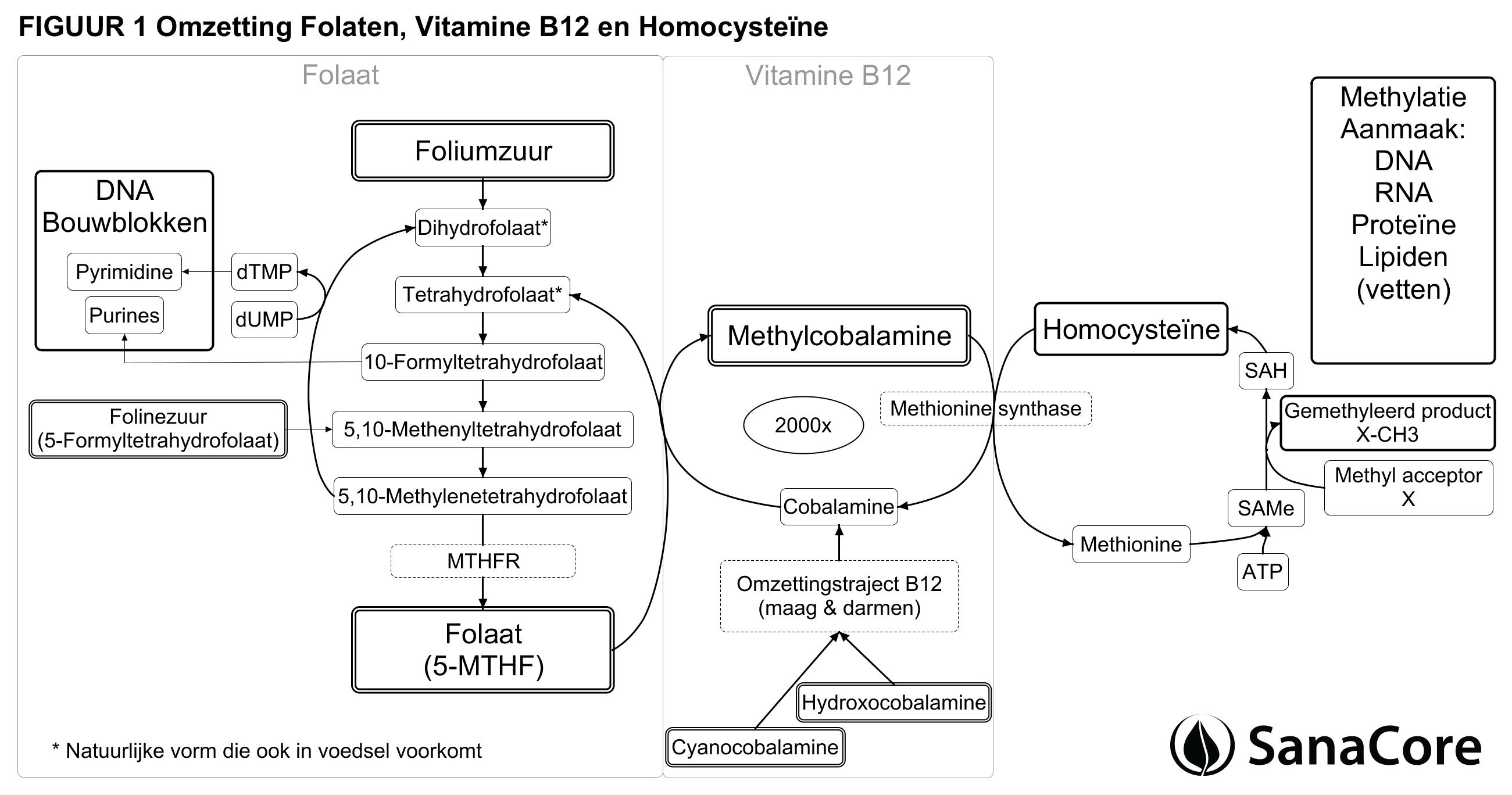 foliumzuur b12